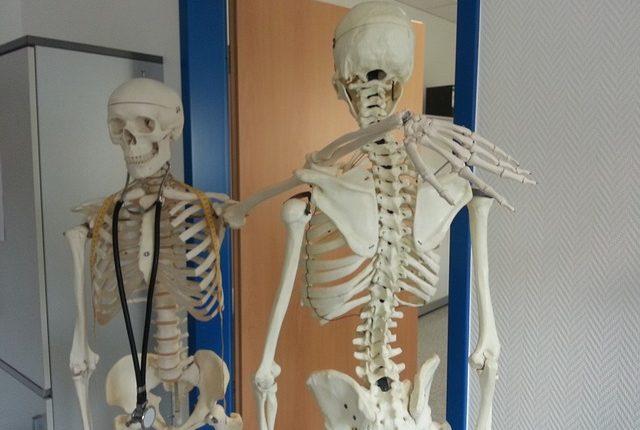 skeleton-645528_640