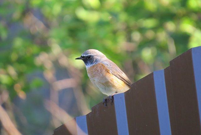 bird-4067476_640
