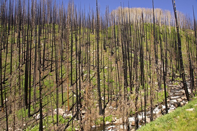 forest-fire-1901055_640
