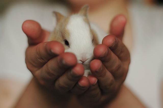rabbit-2742525_640