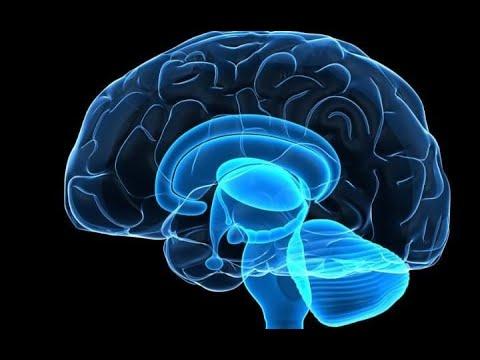 Первичные-культуры-опухолей-головного-мозга-человека-как-модель-для-опухоль-адресующей-терапии-глиом