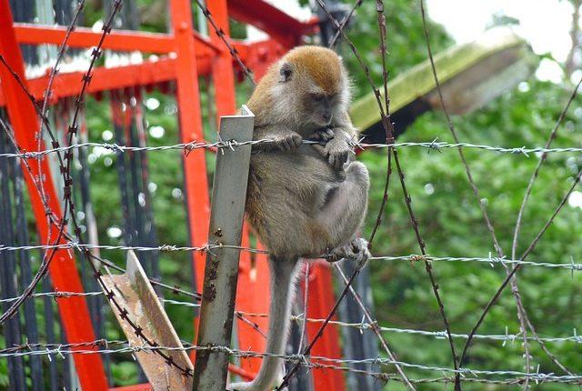 monkey-2419522_640
