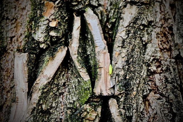 tree-3417779_640