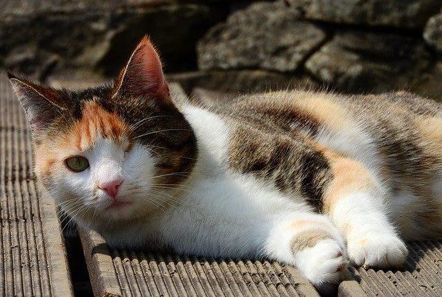cat-4044532_640