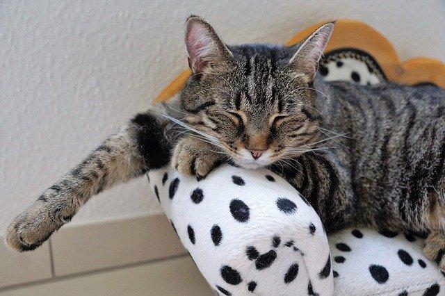 cat-2668562_640