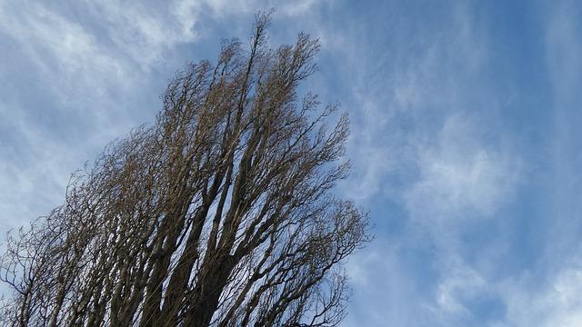 tree-595967_640