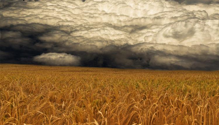 storm-coming-priroda-stihiya-pole-tuchi–460814